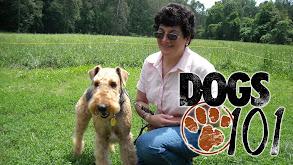 Dogs 101 thumbnail