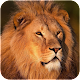 Download Lion HD Wallpapers For PC Windows and Mac