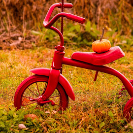 Childhood means simplicity  by Deborah Lucia - Artistic Objects Still Life ( field, red, tricycle, vintage, pumpkin, child's toy )