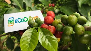 Cultivo con Ecoculture.