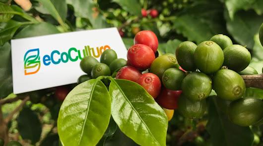 Ecoculture se consolida en Sudamérica y prepara su llegada a Oriente Próximo