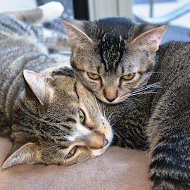Wally and Bella by Beth Bowman - Animals - Cats Portraits (  )