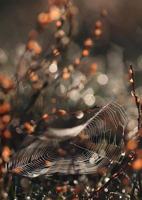 La tela del ragno di Fe140