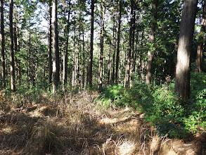 林道の状態は良い