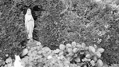 Photo: 1943 'Mariagrot' in de hof van Klooster-Seminarie Liesbosch-Princenhage.