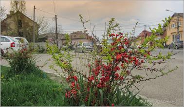 Photo: Turda - Str. Andrei Muresanu - spatiu verde al spitalului  - 208.04.13