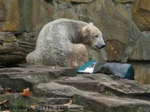 Photo: Knut behaelt das unbekannte Teil lieber im Auge ;-)