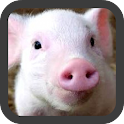 Little Pig wallpaper icon
