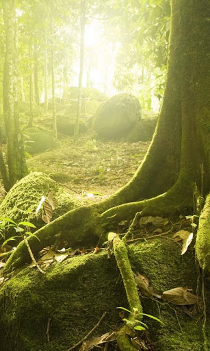 Lwp 森林