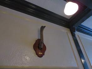 Photo: Trophy mount at Bily Kun bar