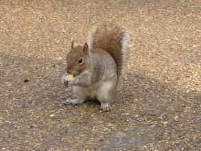 Photo: Squirl