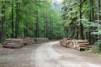Photo: Droga leśna z Siemian (Schwalgendorf) do Solnik (Zollnick)