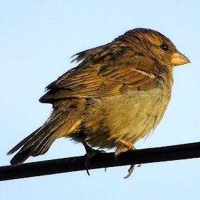 SUMMER BIRD by Cynthia Dodd - Novices Only Wildlife ( animals, nature, outdoors, wildlife, birds, birding )