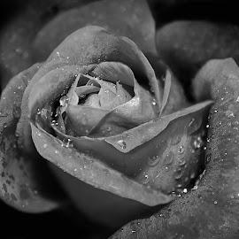 by Shawn Thomas - Black & White Flowers & Plants