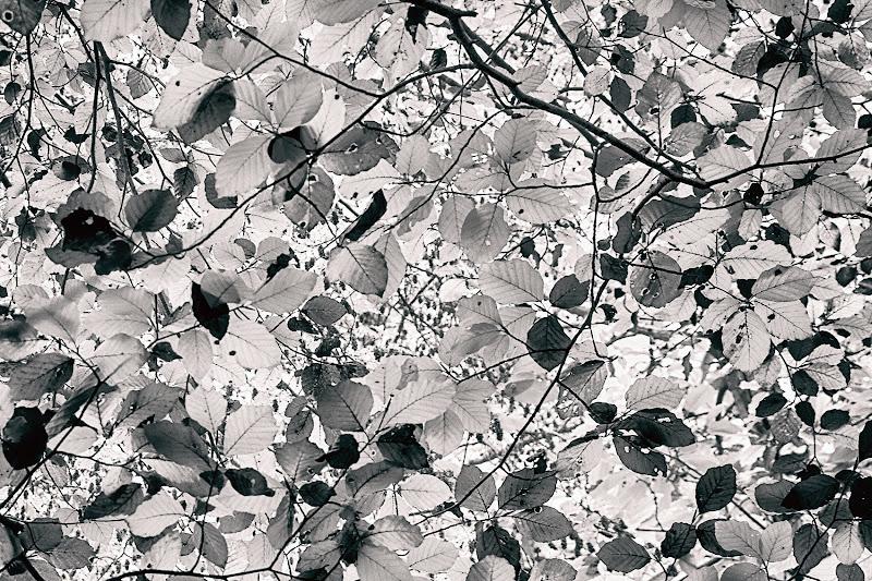 Texture d'autunno di Fotodiale