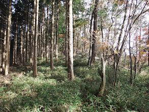縦走路の半分以上は植林帯