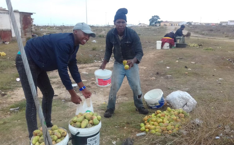 Zolile Jacobs (left) selling his prickly pears in Motherwell, Port Elizabeth.