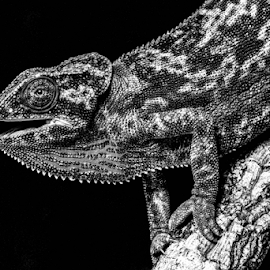 Lizard by Garry Chisholm - Black & White Animals ( macro, lizard, nature, garrychisholm, reptile )