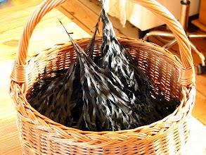 Photo: Det her er Langfrugtet klørtang fra høst ved Fornæs den 2.10.2011. Det vejede 1.800 gram ved høst og nu ca. 300 gram. Vægttab mere end 80% på under 14 dage. Ho ho. Mon ik' det går an?