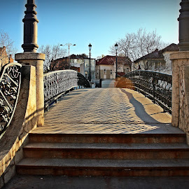 bridge by Eve Constantinescu - Buildings & Architecture Bridges & Suspended Structures ( bucharest, bride, city )