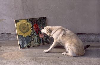 """Photo: Pies ogląda obrazy Pr. Kwieka z cyklu """"Awangarda bzy maluje"""" (C.) The dog contemplate Pr. Kwiek's oil pictures from the cycle """"Vanguard paints lilacs"""" (C.)"""