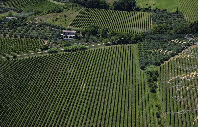 Le geometrie dei vitigni e degli ulivi. di frapio59