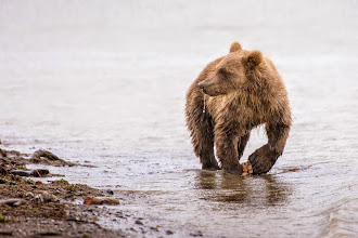 Photo: Cub on the beach