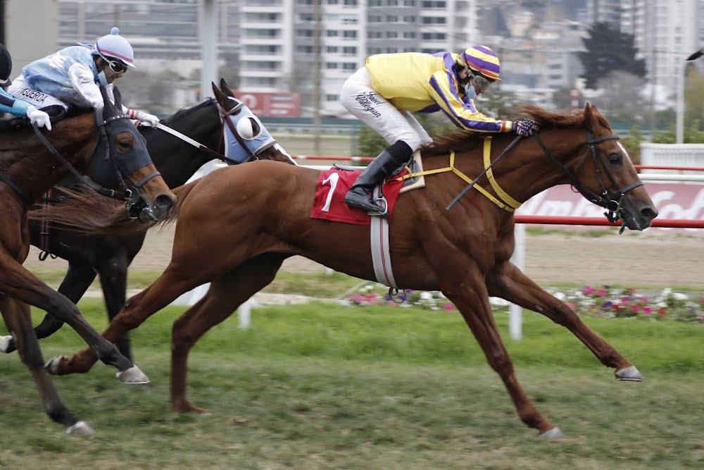 Il Don (Don Cavallo) se impuso en Condicional (1000m-Pasto-VSC).