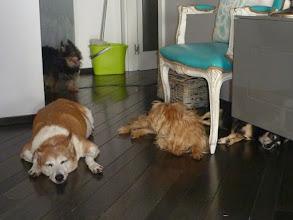 Photo: Ein Teil von Montses eigenen Hunden, bzw. die dann eben dageblieben sind ;-) Vorne links Duende, er kam von einem schlimmen Messitypen in Spanien.