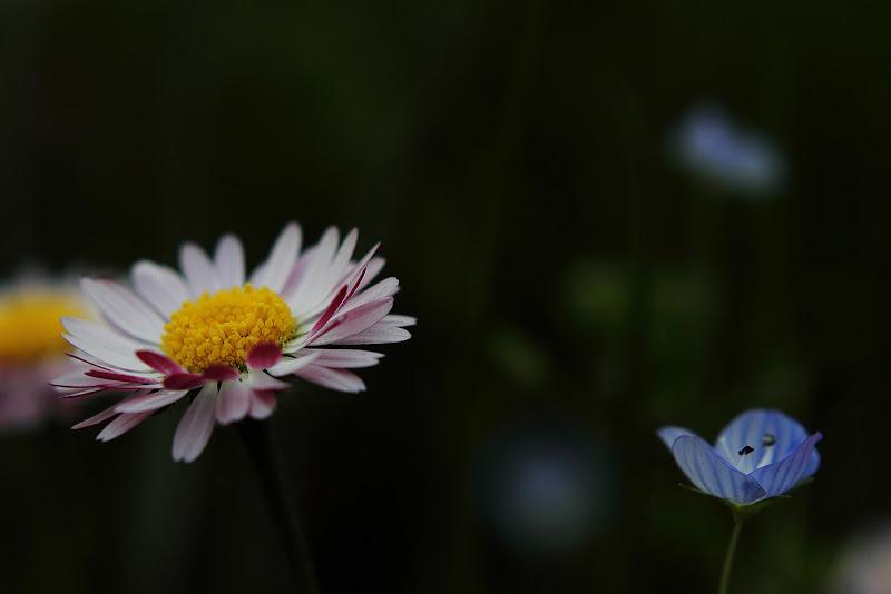 fiori di campo di rino_savastano