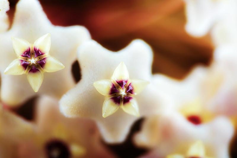 Hoja | i fiori di cera di Paolo De Chellis