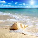 seashells live wallpaper icon