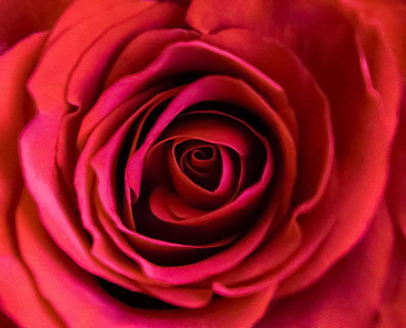 Rosso rosso di Diana Cimino Cocco