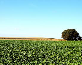 Photo: Horizont  #treetuesday // +Tree Tuesdaycurated by +Shannon S. Myersand +Christina Lawrie #landscapephotography // +Landscape Photographyby +Margaret Tompkins// +Carra Riley// +Bill Wood// +paul t beard// +Jim Warthman// +Ben T+David Heath Williams #Fotoamateur // +Fotoamateur #HQSPLandscape by +Ara MO// +Delcour Eric// +Rodolfo Seide// +Rinus Bakker #bluesky // #Tree // #treephotography
