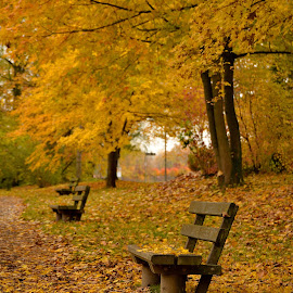 Never rested enough? by Abhinav Ganorkar - City,  Street & Park  City Parks ( park benches, autumn colors, city park, autumn leaves, autumn,  )