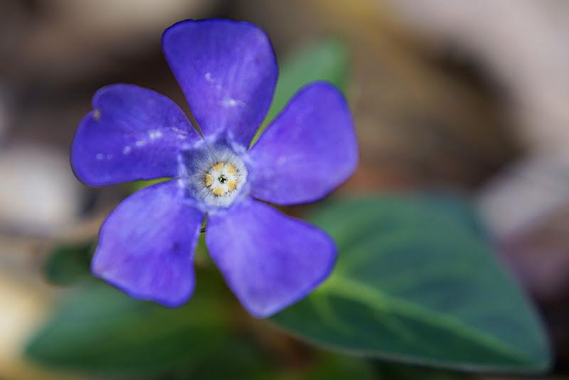 Viola di Liut766