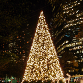 Oh! Christmas Tree by Myra Brizendine Wilson - City,  Street & Park  Night ( charlotte, uptown charlotte, nc, buildings in charlotte, christmas lights, christmas, christmas lights in charlotte )