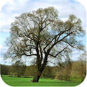 App Icon for Trees of Britain App in Czech Republic Play Store