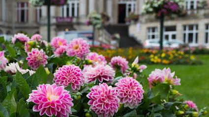 Lawenda 24 Artykuly Na Ten Temat Zielony Ogrodek Purple Garden Garden Plants
