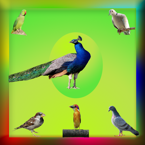 Birds Gallery Live Wallpaper- screenshot