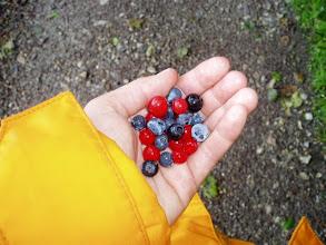 Photo: Assorted Wild Berries