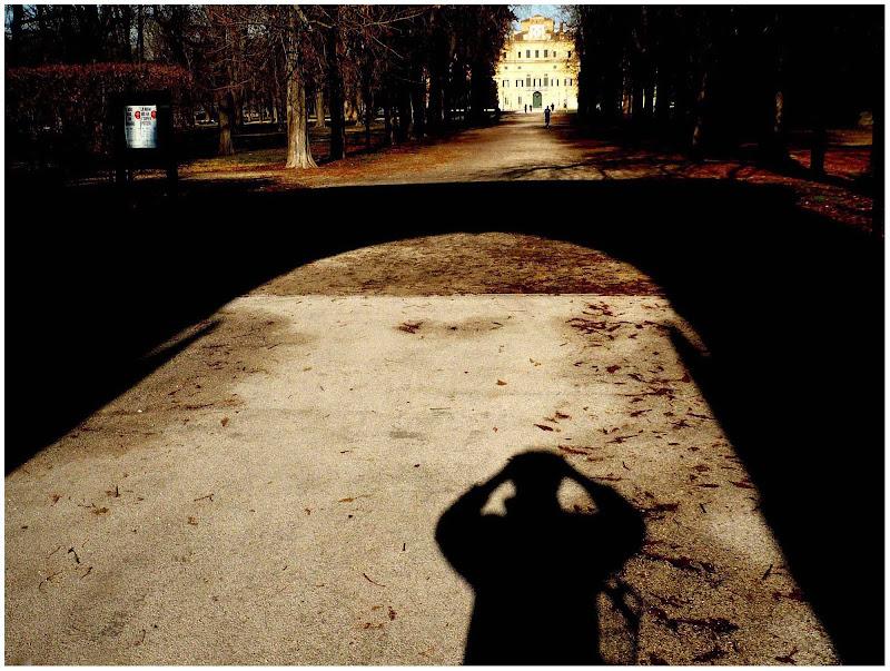 parco ducale di acero