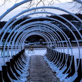 Dizzy by Manasvini Munjal - City,  Street & Park  City Parks ( festive, circles, parks, snow, symmetry )