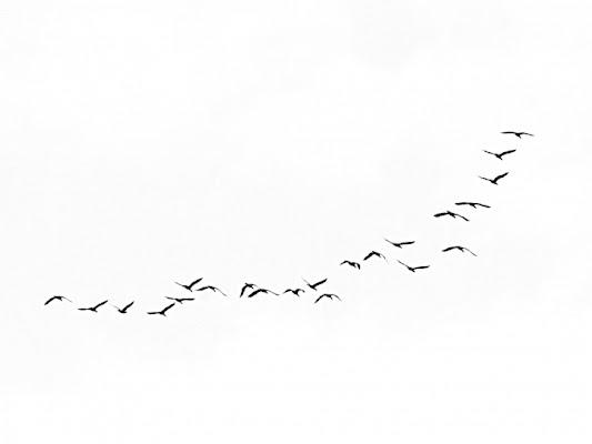 Vita da uccelli II di Andrea_Bottai
