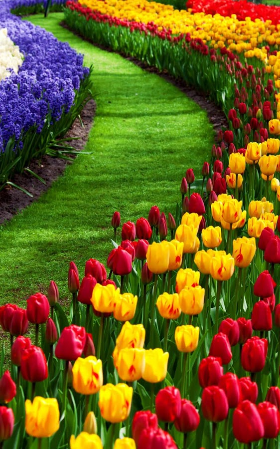 Flower Garden Wallpaper garden live wallpaper - android apps on google play