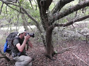 Photo: Will Burrard-Lucas, wildlife photographer, photographing Ghost Orchids in bloom - Dendrophylax fawcettii,  on a Smoke Wood tree - Erythroylum areolatum. #10 Epiphyte Woodland  Photo: Ann Stafford, May 10, 2012