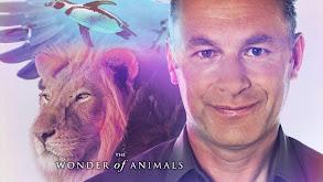The Wonder of Animals thumbnail