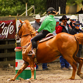 Horse Rider by Russell Benington - People Street & Candids ( rider, barrel racing, arena, horse, rodeo,  )