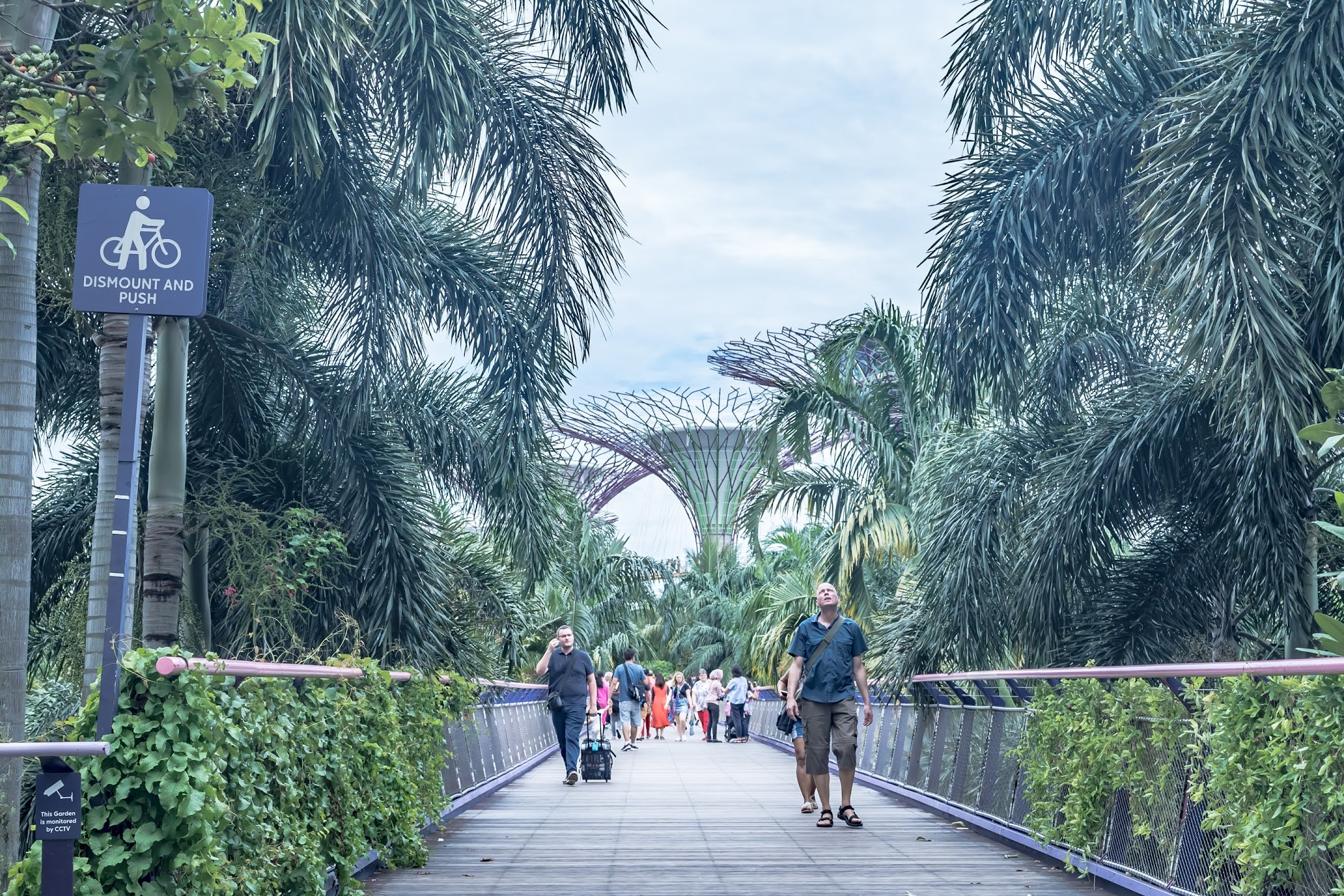 Singapore Gardens by the Bay Dragonfly Bridge1