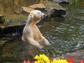 Photo: Eisbaerchen Knut :-)